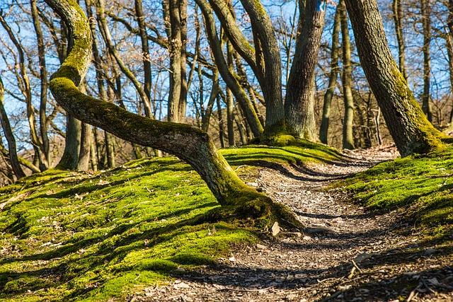 Traillaufen im Wald