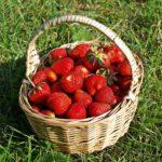 Reich an Antioxidantien