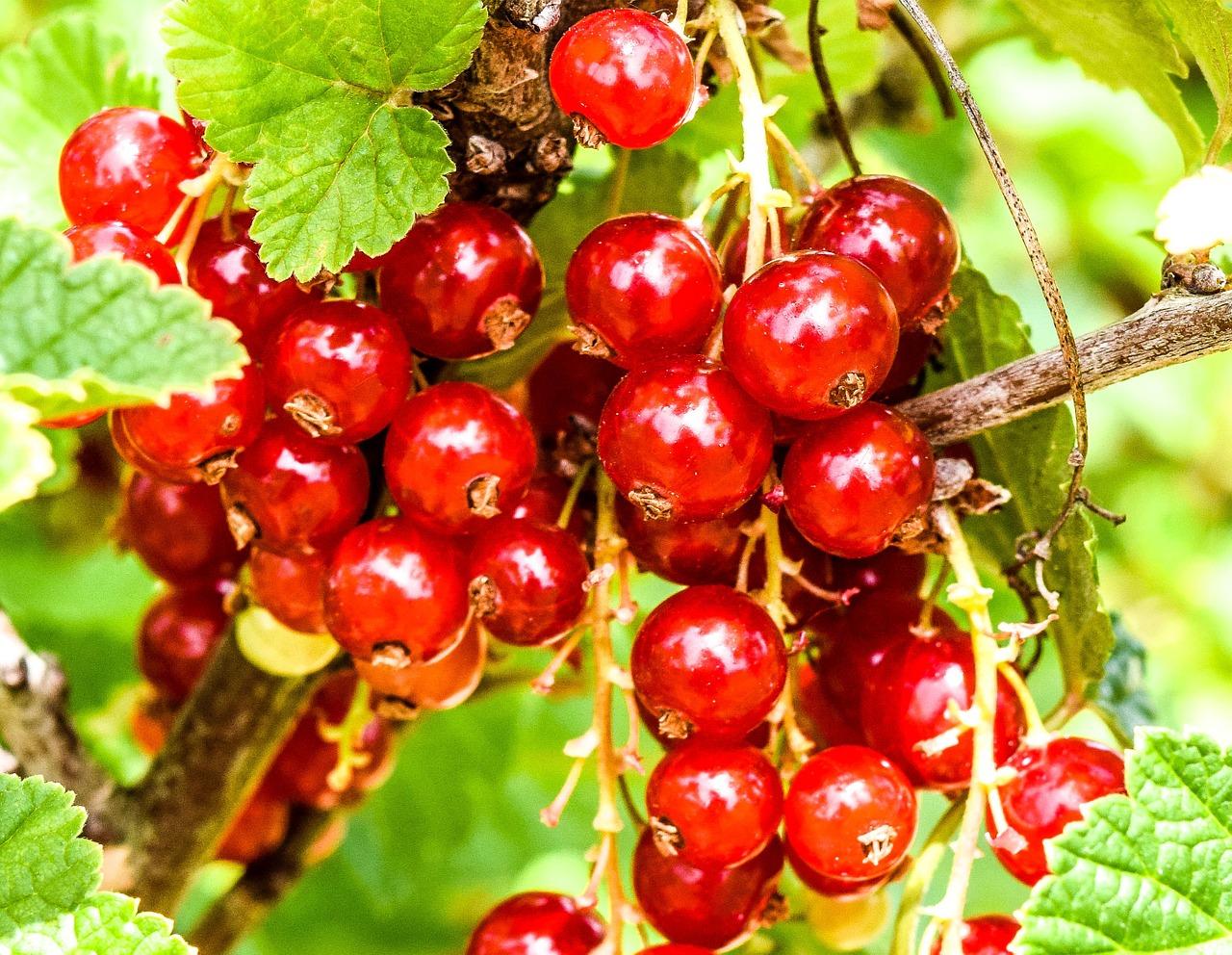 Fruchtpower