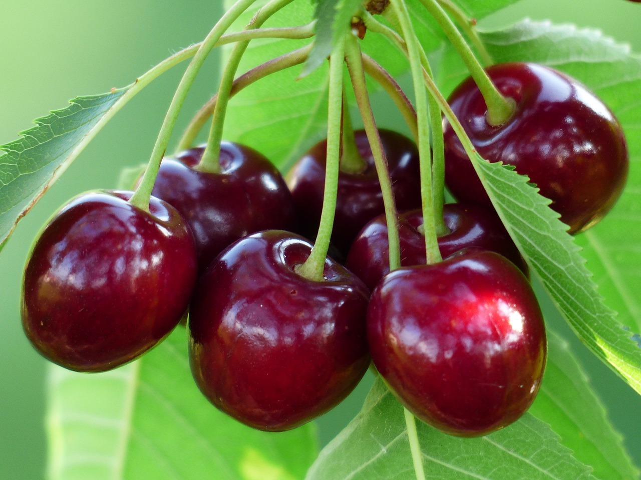 Fruchtpower durch Antioxidantien