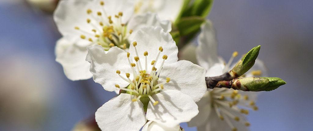Bachblüten bei Lampenfieber
